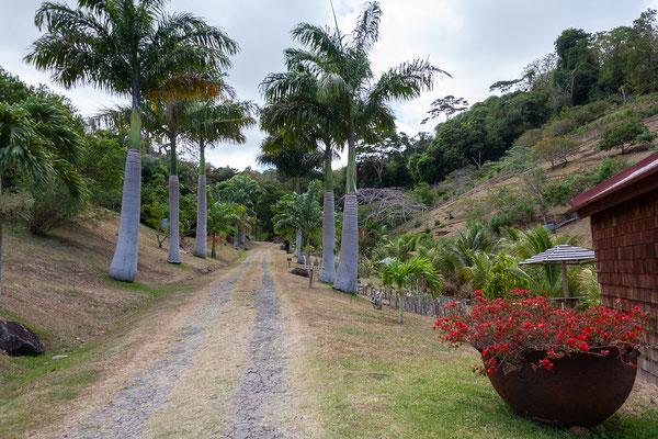 Belmont Estate: Orchideengarten