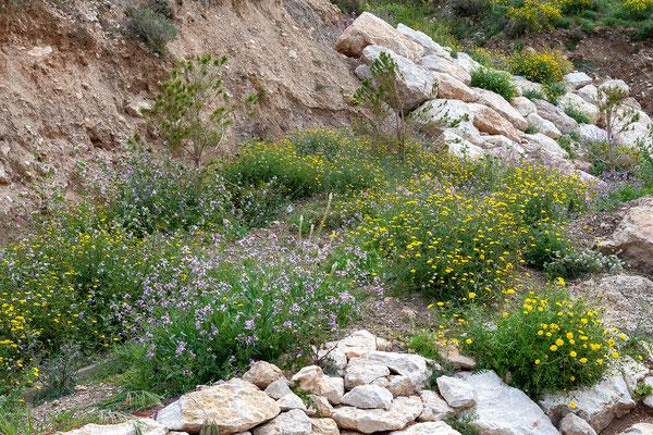02.04. Unser erstes Ziel ist der Parc Natural del Penyal d'Ifac.