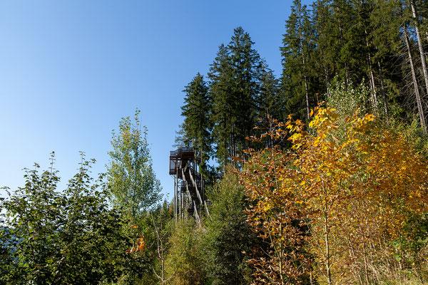 Über den Gratweg erreicht man nach weiteren 500 m den Einstieg zum Wipfelwanderweg.