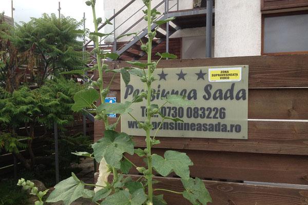 15.6. Cluj - Pensiunea Sada