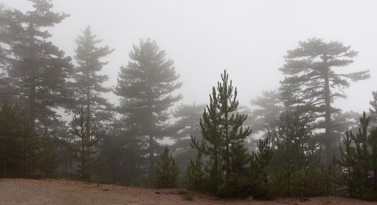 04.09. Trotz eisetzendem Starkregen unternehmen wir einen Abstecher in die Berge oberhalb des Calacuccia Stausees.