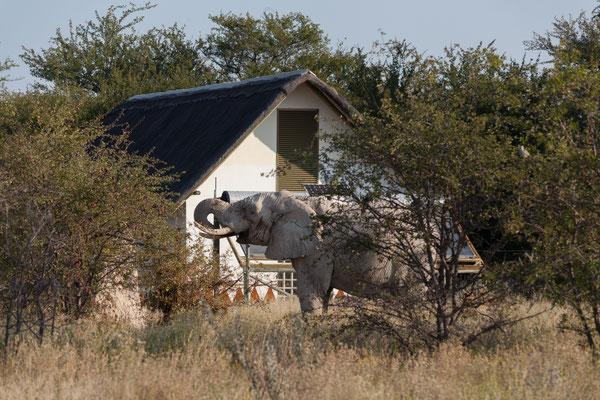 11.05. Nxai Pan NP, die Sanitärs wurden nicht umsonst gegen Elefanten abgesichert