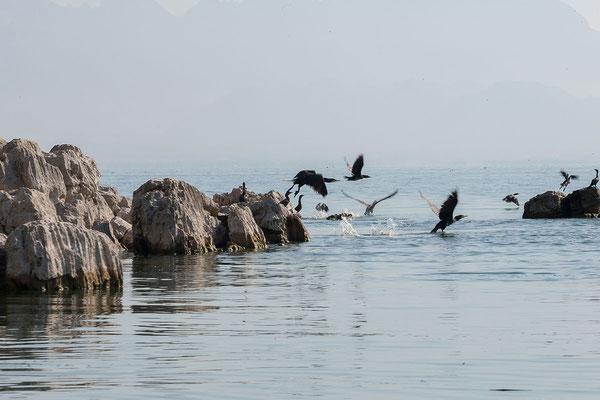 16.9. Bootsfahrt am Skadarsko Jezero