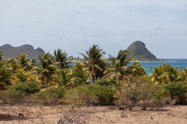 Blick auf Saline und White Island