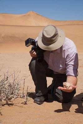 21.2. Namaqua chaemaeleon (Chamaeleo namaquensis)