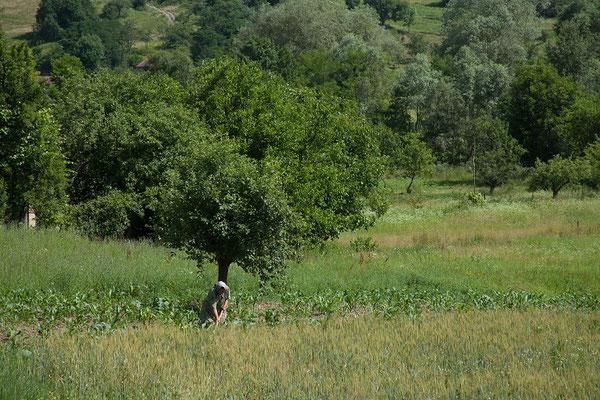15.06. Unterwegs ins Apuseni-Gebiet, das für seine vielfältige Landschaft bekannt ist.