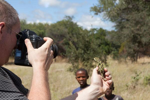 26.4. Unterwegs ein echtes Highlight: wir bremsen für ein Chamäleon (Flap-neck chameleon - Chamaeleo dilepis).