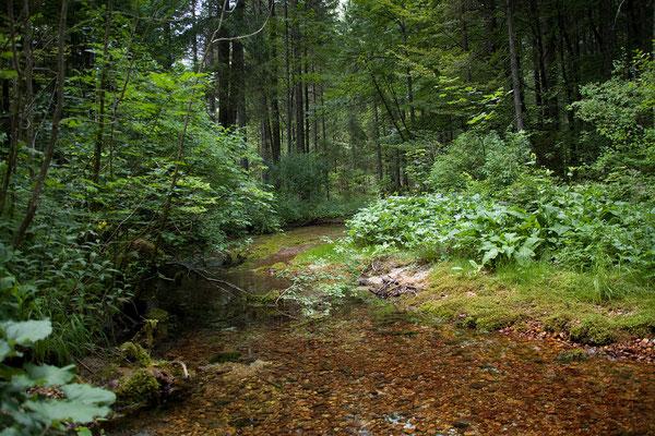 Nebenstrecke nach Bled