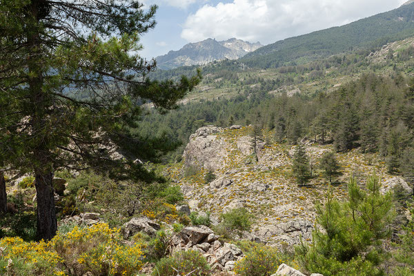 03.06. Zwischen Col de Vergio und Calacuccia
