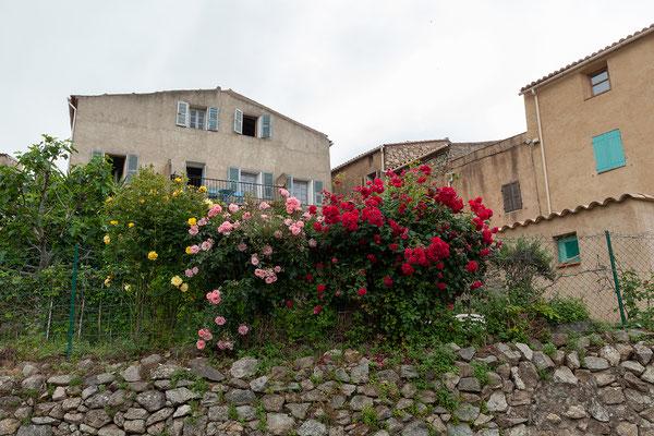 31.05. Speloncato gilt als eines der schönsten Balagne Dörfer.