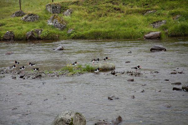 29.7. Färöer Inseln - Streymoy
