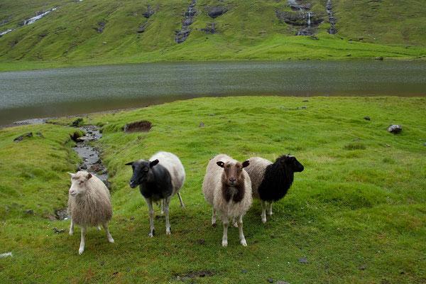 29.7. Färöer Inseln - Streymoy - Leynarvatn