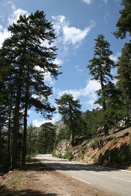 1.6. Nach dem Col de Vergio besuchen wir die bei Evisa gelegenen Piscines Naturelles d'Aitone.