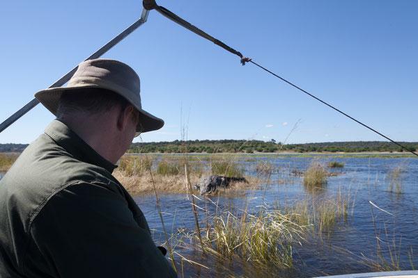 02.05. Bootstour auf dem Chobe Nilkrokodil - Crocodylus niloticus