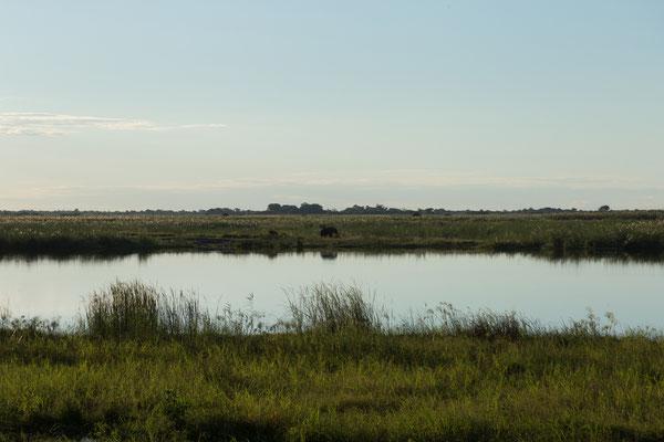 04.05. Chobe NP - Linyanti Campsite; wir sehen Elefanten und Krokodile von der Campsite aus.