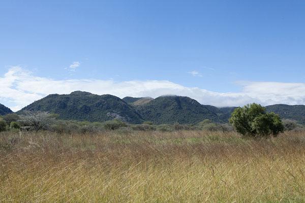 22.4. Durch sattgrüne Landschaft fahren wir Richtung Grootfontein.