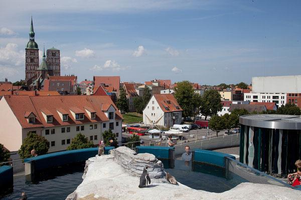 24.7. Stralsund - Ozeaneum
