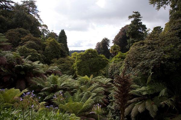 09.09. Die Trebah Gardens sind entlang einer Schlucht angelegt.