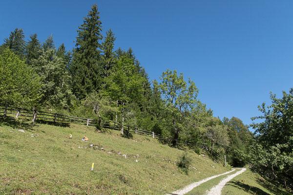 13.08. Bauernhof Gradišnik, 3D Parcours, Logarska Dolina