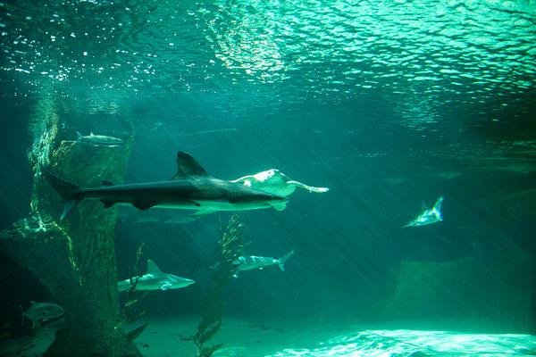 25.09. Aquarium