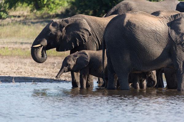 ... Elefantenfamilie!