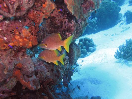 Tori's Reef