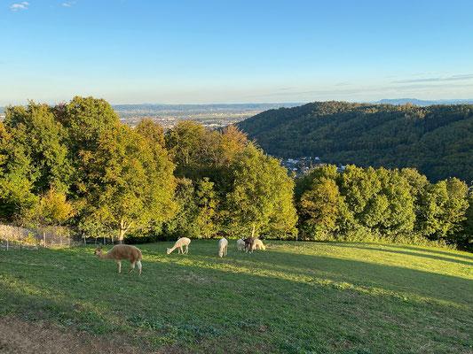 14.10. Schloß St. Martin - Oacherlsteig - Orthacker - Aussichtsplattform Schau West - Schloß St. Martin