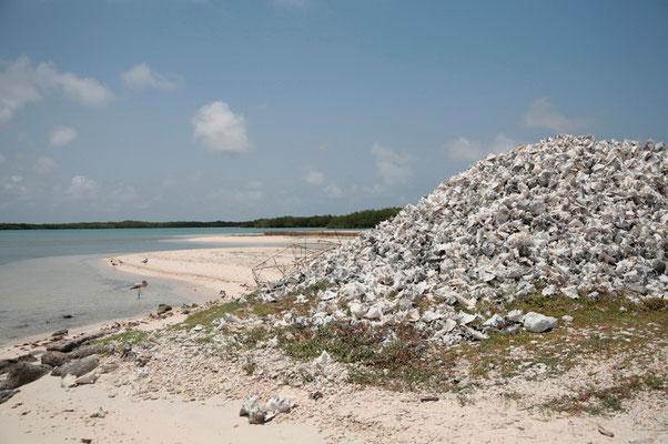 Lac Bay: die große Fecherschnecke (Conch) ist eine der größten Schneckenarten überhaupt. Ihr Fleisch ist eine Delikatesse. Davon zeugen auch die riesigen Schalenberge!