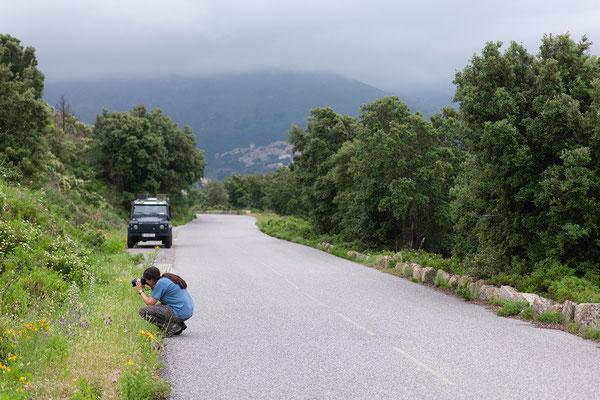 31.05. Fotostopp in der Balagne nahe Belgodère