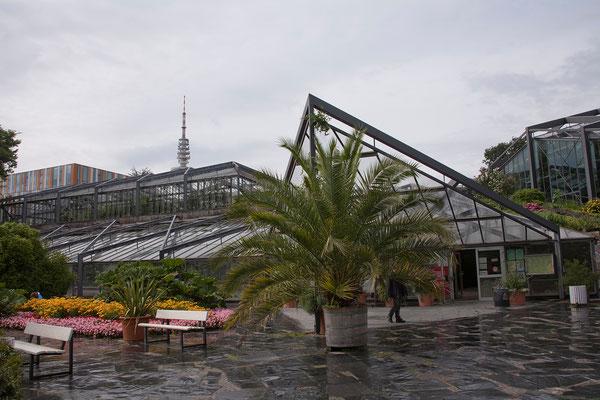 23.07. Planten un Blomen: auch die schönen Gewächshäuser sehen wir uns an.