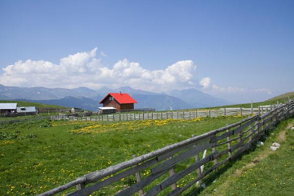 03.06. Rodna Nationalpark, Sumpfdotterblumen auf 2000 m.
