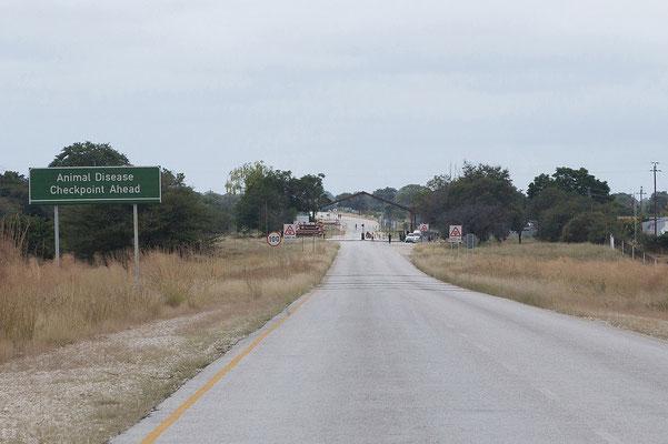 """23.4. Mit dem Passieren des Veterinärzaunes nördlich von Grootfontein landen wir """"wirklich"""" in Afrika. Die großen Farmen weichen kleinen Dörfern, merklich mehr Menschen und Tiere sind an der Straße anzutreffen."""