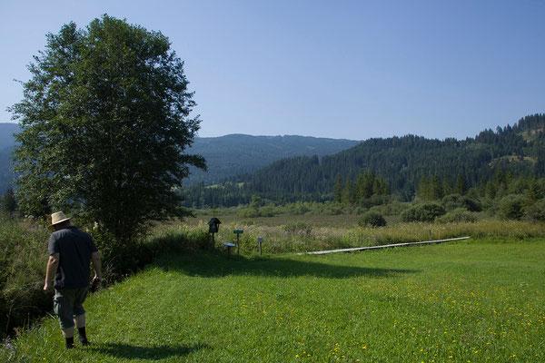 Hörfeld Moor