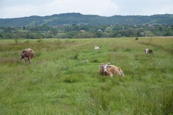 13.6. In Richtung Târgu Jiu fahren wir durch hübsche kleine Dörfer und schöne Landschaft.
