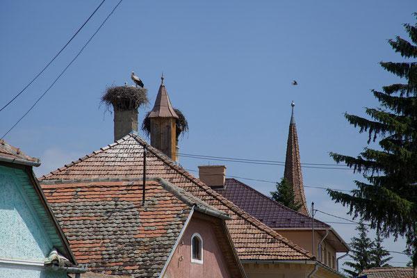 05.06. Störche zwischen Sighișoara und Odorheiu Secuiesc