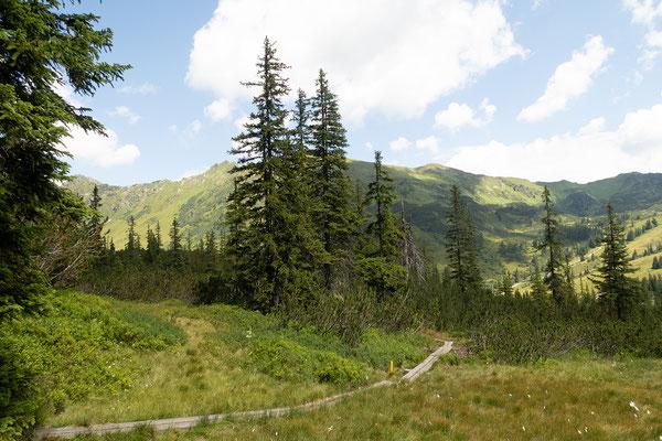28.07. 3D Parcours Robin Hood Land Lackner, Planneralm