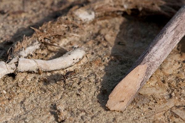 02.09. Désert des Agriates, Plage de Saleccia
