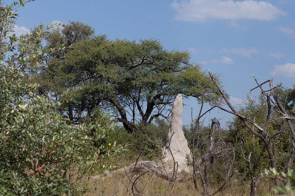 29.4. Bwabwata NP/Kwando Core Area, Termitenhügel