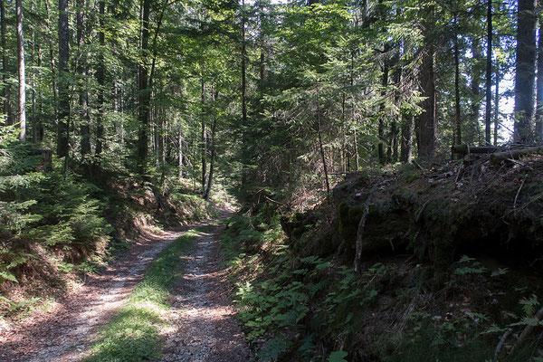 14.08. Route von Črna in Richtung Mozirje