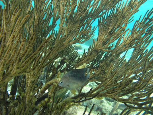 Schnorcheln in den Tobago Cays