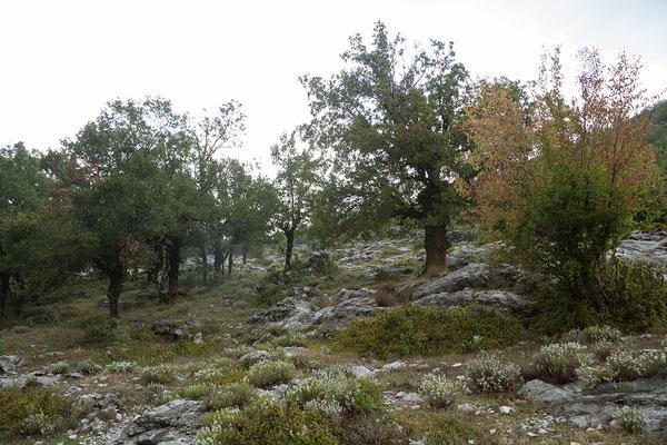 17.9. Weiterfahrt entlang des Skadarsko Jezero.
