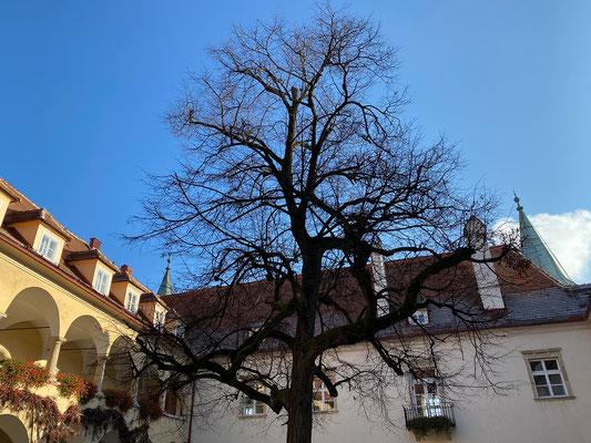 29.11. Schloß St. Martin - Orthacker - Schau West - Oacherlsteig - Schloß St. Martin