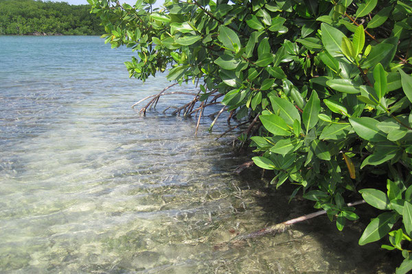 Lac Bay