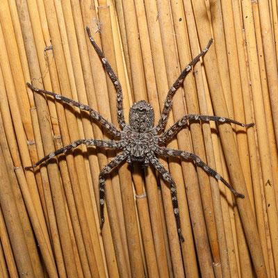 23.4. Diverse Spinnen erfreuen uns.