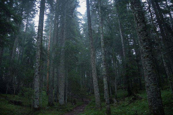 9.9. Rückweg vom Crno Jezero.