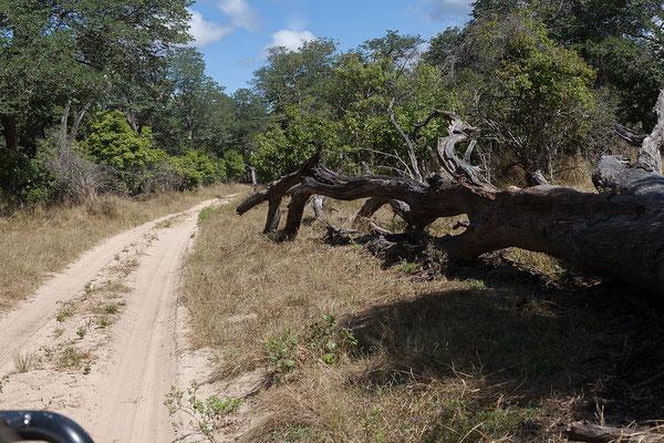 26.4. Bwabwata NP/Kwando Core Area; Der Kwando ist ein 1500km langer Nebenfluss des Sambesi; als Cuando entspringt er in Angola, fließt nach SE, dann folgt ihm die Grenze zu Sambia bis er die Sambesi Region durchfließt.