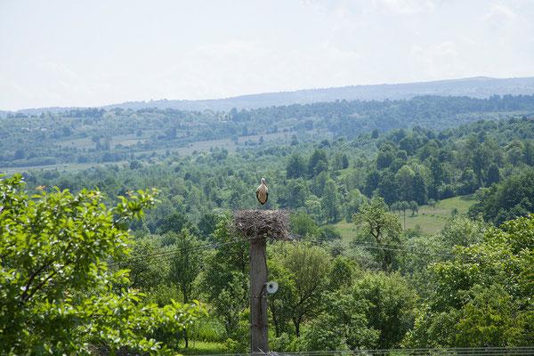01.06. Cuvioasa Paraschiva, Deseşti. Von der Holzkirche haben wir einen tollen Blick in ein Storchennest.