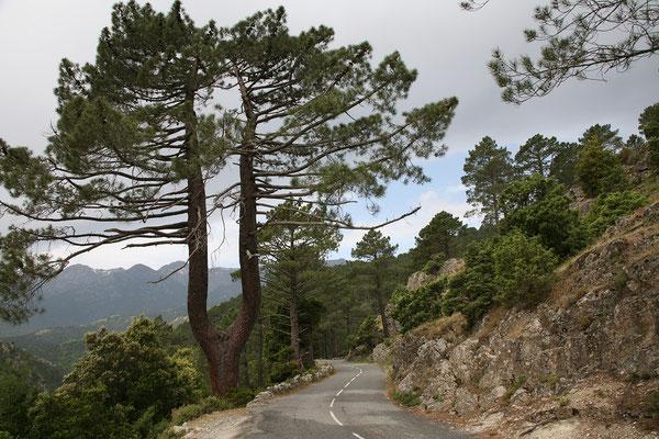 27.5. Wir fahren die schönen Bergstraßen Défilé de Strette und Défilé de l'Inzecca entlang.