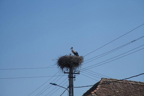 13.06. Christian, eines von vielen Dörfern mit schönen Storchennestern