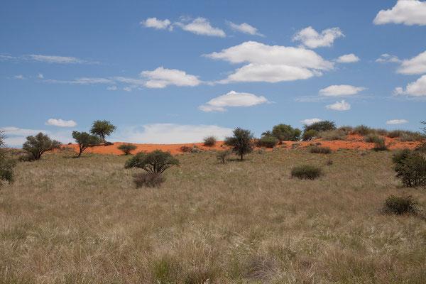 10.2. Die Bagatelle Kalahari Game Ranch liegt malerisch in den roten Dünen der Kalahari.